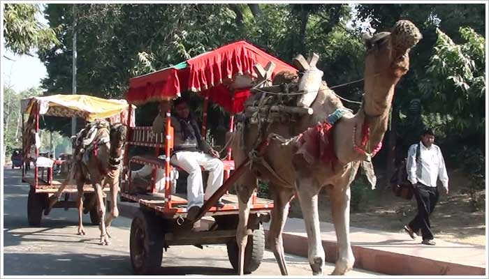 A camel taxi is one of the modes of transport available to take you to the entrance to the Taj Mahal